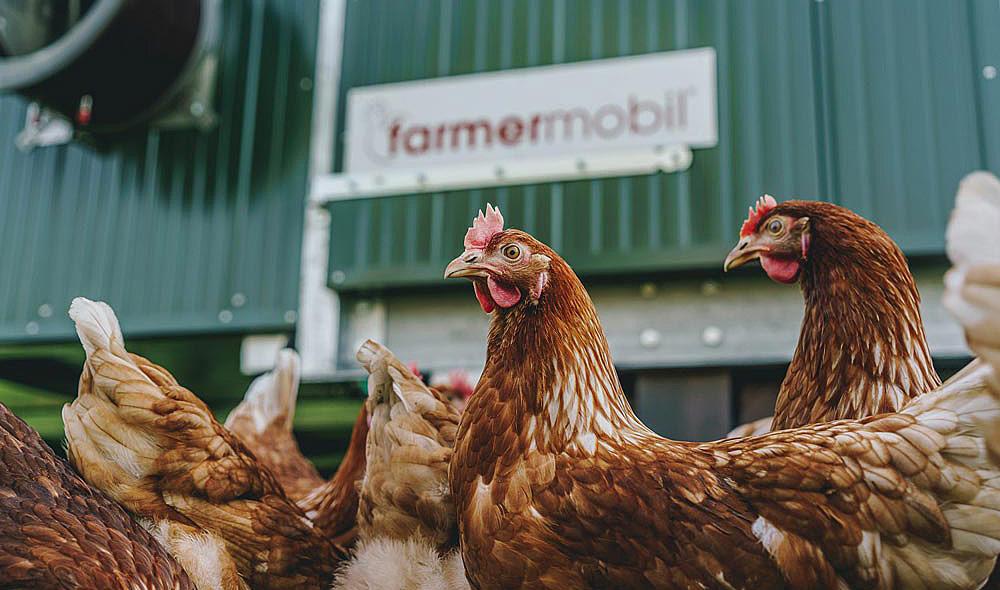 Maientalerhof Hühnermobil Weidehühner